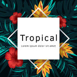 Tropical Vector Poster With Tropical Leaves And Flowers Royalty Free Stock Photo