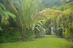 Tropical vegatation, El Yunque, Puerto Rico Royalty Free Stock Photo