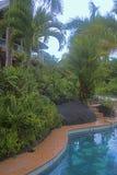 Tropical vegatation, El Yunque, Puerto Rico Stock Photography