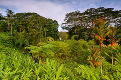 Tropical vegetation with Akaka falls at background. East of Big Island, Hawaii Stock Photography