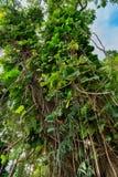 Tropical vegetation along the road to hana maui hawaii Stock Photography