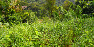 Tropical Vegetation Background Stock Images
