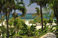 Tropical vegetation and beach Stock Image