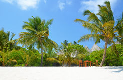 Tropical vegetation on the beach Stock Photo