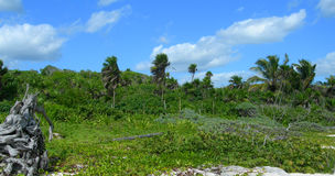 Tropical vegetation in the Caribbeans Stock Photography