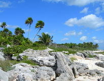 Tropical vegetation in the Caribbeans Mexico Royalty Free Stock Photos
