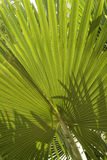 Tropical vegetation green palm fronds Royalty Free Stock Photography