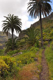 Tropical vegetation on La Gomera Stock Image