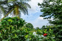 Tropical vegetation on lakeshore in Guatemala Royalty Free Stock Images