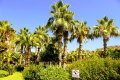 Tropical vegetation in the park of the 100th anniversary of Ataturk Alanya, Turkey Royalty Free Stock Photography