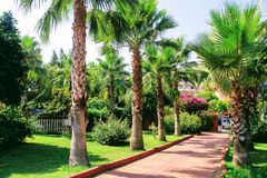 Tropical vegetation in the park of the 100th anniversary of Ataturk Alanya, Turkey Stock Images