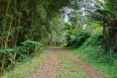 Tropical vegetation and a path French Polynesia Royalty Free Stock Photo