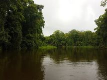 On the River, Tortuguero. Tropical vegetation, On the River, Tortuguero, Costa Rica stock photos