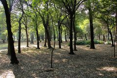 Tropical trees in Chapultepec Park. Tropical vegetation and trees in Chapultepec park in Mexico city,CDMX. Federal District. Ahuehuete Royalty Free Stock Photography