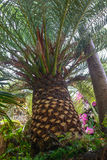 Tropical vegetation Stock Photo