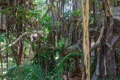 Tropical vegetation Stock Image