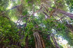 Tropical vegetation Royalty Free Stock Photos