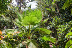 Tropical vegetation Royalty Free Stock Images