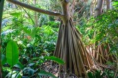Tropical vegetation Stock Images