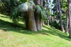 Tropical vegetation Stock Photos