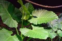 Tropical vegetation Royalty Free Stock Image