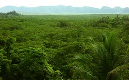 Tropical vegetation. View of tropical vegetation,Philippines Royalty Free Stock Photo