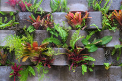 Tropical vertical garden. Tropical garden on a wall with bromeliads and other flowers Stock Photos