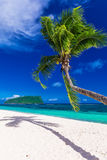 Tropical vibrant natural beach on Samoa Island with palm tree Stock Image