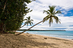 Tropical View stock image