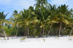 Tropical view. A group of coconut palm trees on a tropical beach Stock Photos