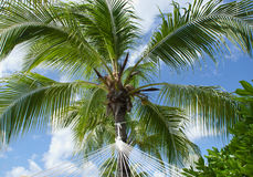 Palm tree and a hammock Stock Photos