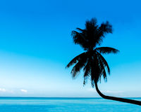 Tropical View of Silhouette Curve Coconut Tree on The Beach with Blue Sky and Sea Royalty Free Stock Photos