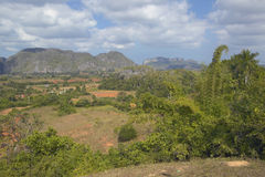 Tropical view of the Valle de Vi�ales, in central Cuba Royalty Free Stock Images