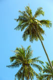 Tropical view from window on the palm tree Stock Images