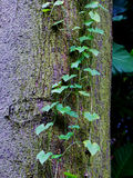 Tropical vines on tree trunk Stock Image