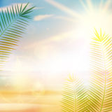 Tropical vintage palm background design. Stock Photos
