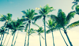 Tropical vintage palm image. Stock Image