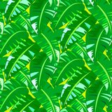 Tropical vintage pattern with big banana leafs Stock Photos