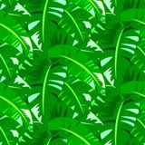 Tropical vintage pattern with big banana leafs Royalty Free Stock Images