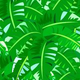 Tropical vintage pattern with big banana leafs Stock Photo