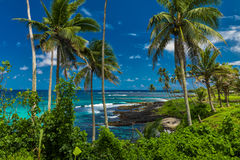 Tropical volcanic beach on Samoa Island with many palm trees Stock Photography