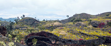 Tropical volcanic landscape on big Stock Images