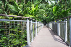 Tropical Walk Royalty Free Stock Photo
