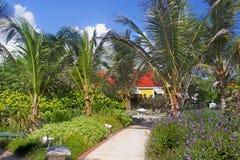 Tropical Walkway Stock Photo