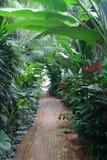 Tropical walkway Stock Photos