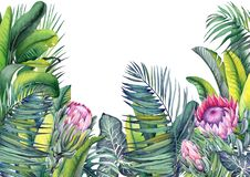 Free Tropical Wallpaper With Exotic Protea Flowers, Palm And Banana Leaves. Royalty Free Stock Photos - 163489958