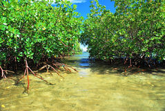 Tropical Water Stock Images