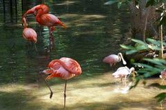 Tropical Water Beauties. Taken at the Homosassa Springs Wildlife State Park, Homosassa Springs Fl Stock Photos