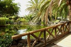 Tropical water garden stock photos