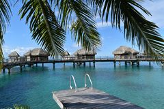 Tropical water huts, bungalows in Bora Bora Tahiti idyllic honeymoon vacation with palm tree leaves. Against the blue sky royalty free stock photography